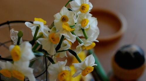 咲き始めた水仙で。_d0091671_1954528.jpg