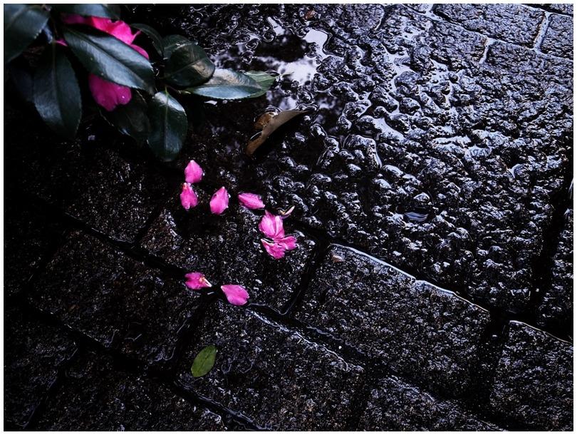 雨あがる_d0151003_0483425.jpg