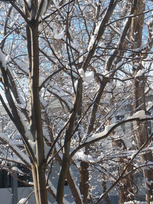 豪雪・低温・快晴・再び豪雪_c0025115_17344736.jpg