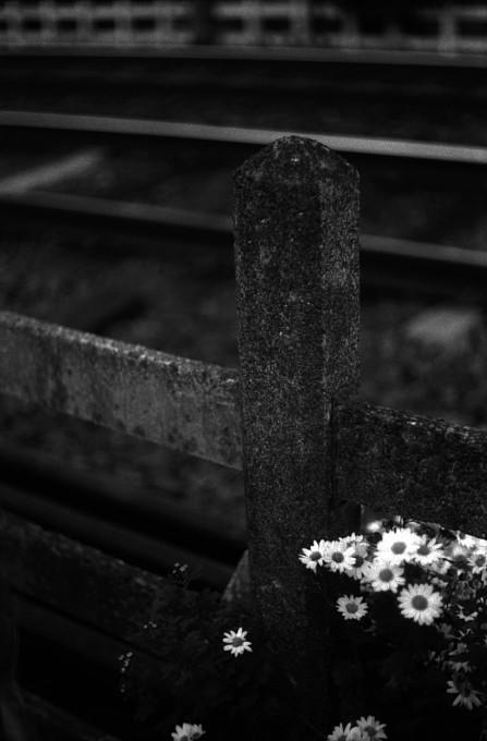 2012-1-10 ささやかな風景_c0136330_1510417.jpg