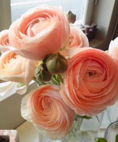 春の色_a0229658_13165746.jpg