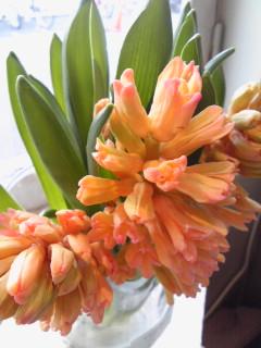 春の色_a0229658_13171357.jpg