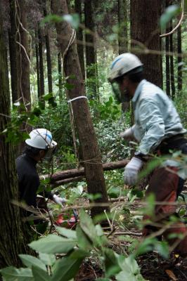 飫肥杉ツアー2011秋 レポート_f0138874_16254767.jpg