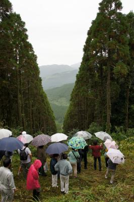 飫肥杉ツアー2011秋 レポート_f0138874_1625775.jpg