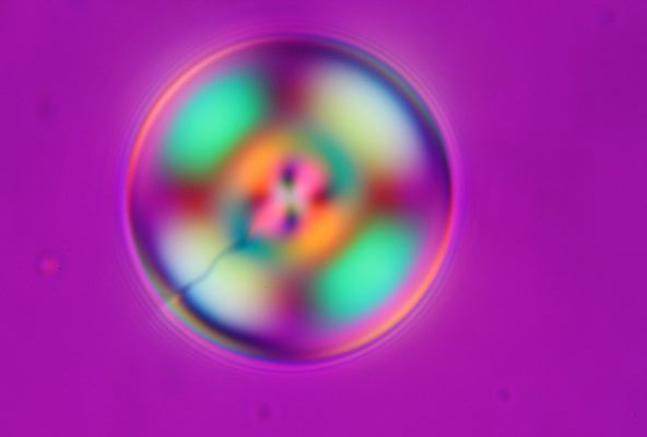 cholesteric droplet in glycerol_c0164709_21234491.jpg