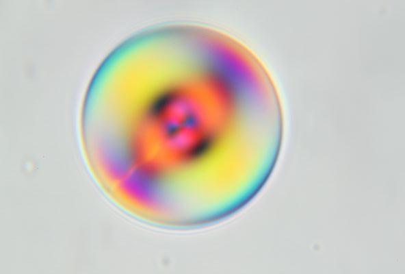 cholesteric droplet in glycerol_c0164709_21234765.jpg