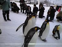 旭山動物園_d0086634_1630102.jpg