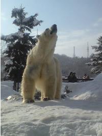 旭山動物園_d0086634_16302588.jpg