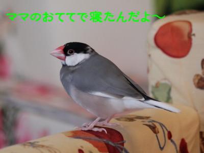 b0158061_20294748.jpg
