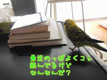 f0196665_2348332.jpg