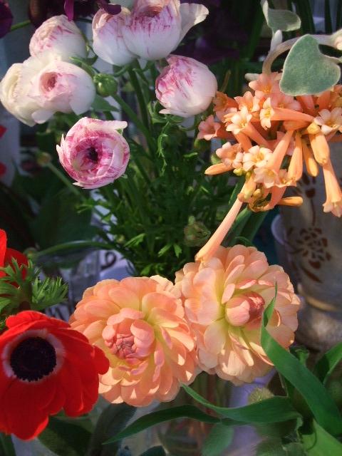 オークリーフ(ダリア・恋祭り)_f0049672_14574615.jpg
