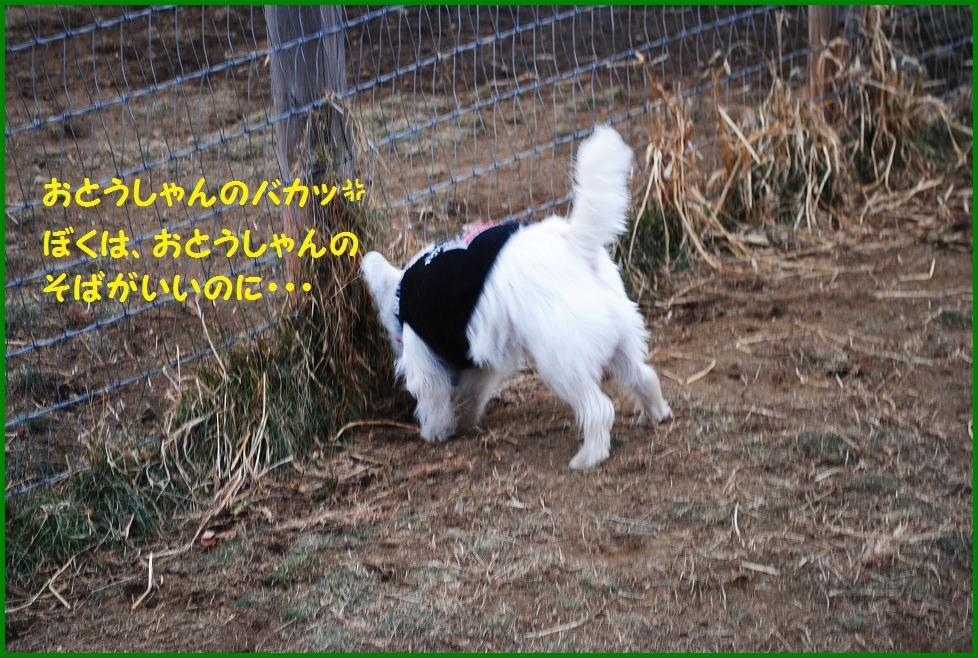 b0242873_053270.jpg