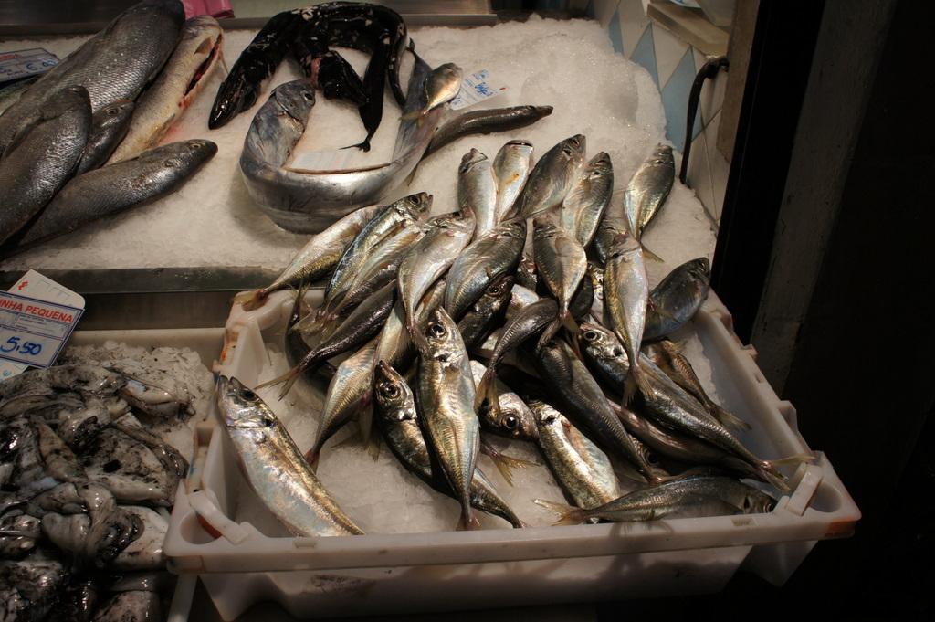 リスボンの魚市場!_c0180686_18414562.jpg