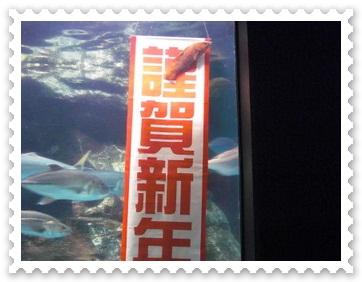 b0169292_20122011.jpg