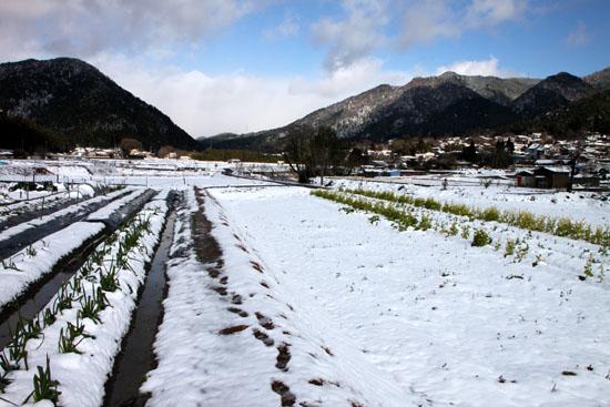 大原の里 雪景色_e0048413_2114015.jpg