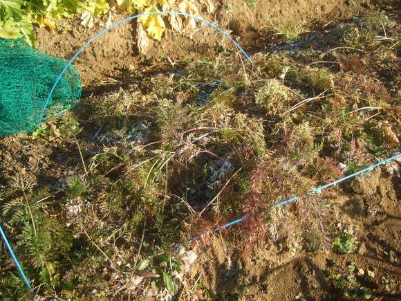 今年初めての野菜畑...雨が欲しい_b0137932_132752.jpg