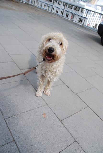 ドイツの思い出(ぽつぽつ思い出したこと)と好きな犬種_c0099133_2254351.jpg