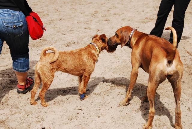 ドイツの思い出(ぽつぽつ思い出したこと)と好きな犬種_c0099133_23181426.jpg