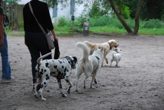 ドイツの思い出(ぽつぽつ思い出したこと)と好きな犬種_c0099133_23194395.jpg