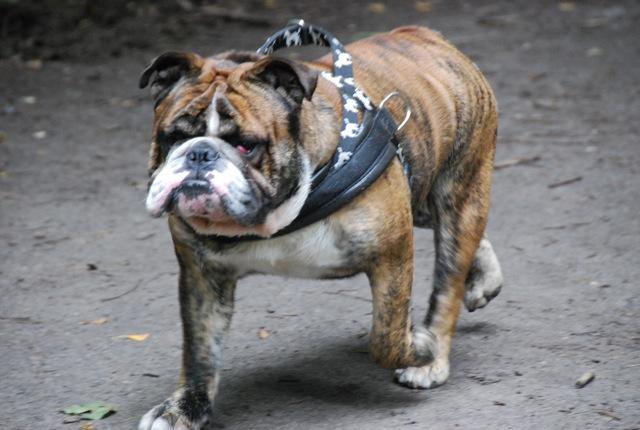 ドイツの思い出(ぽつぽつ思い出したこと)と好きな犬種_c0099133_23202756.jpg