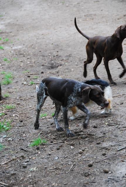 ドイツの思い出(ぽつぽつ思い出したこと)と好きな犬種_c0099133_23205264.jpg