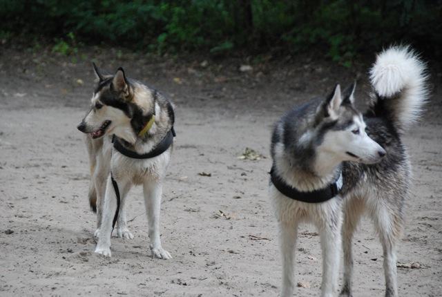 ドイツの思い出(ぽつぽつ思い出したこと)と好きな犬種_c0099133_2322340.jpg