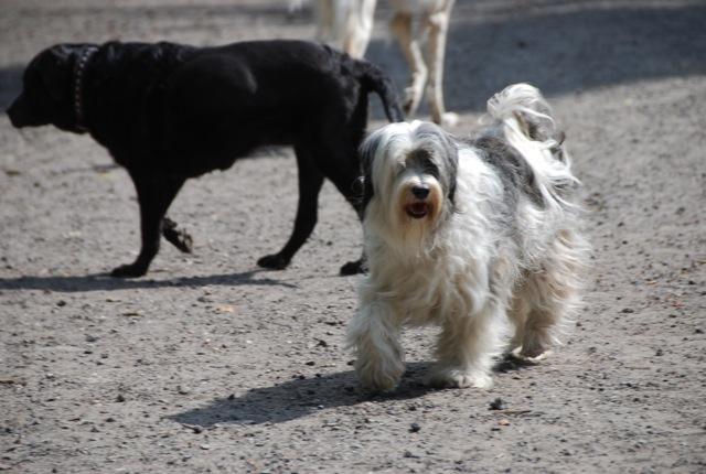 ドイツの思い出(ぽつぽつ思い出したこと)と好きな犬種_c0099133_23414740.jpg