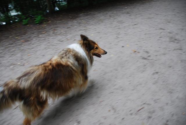 ドイツの思い出(ぽつぽつ思い出したこと)と好きな犬種_c0099133_23421465.jpg