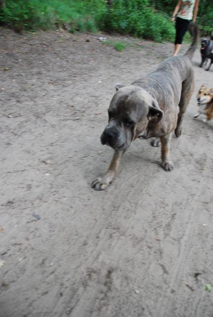 ドイツの思い出(ぽつぽつ思い出したこと)と好きな犬種_c0099133_2342286.jpg
