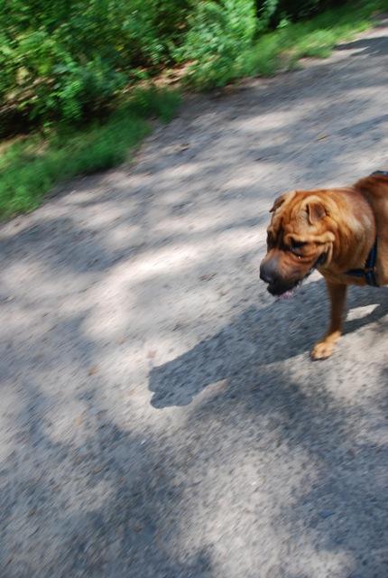 ドイツの思い出(ぽつぽつ思い出したこと)と好きな犬種_c0099133_23525527.jpg