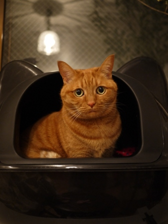 黒猫型トイレ猫 しぇる編。_a0143140_0401759.jpg
