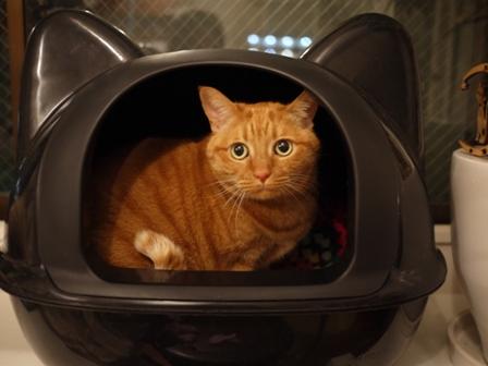 黒猫型トイレ猫 しぇる編。_a0143140_041892.jpg