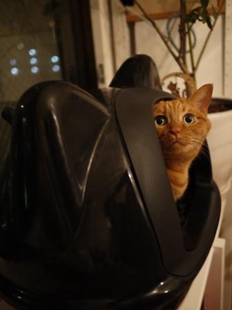 黒猫型トイレ猫 しぇる編。_a0143140_0421635.jpg
