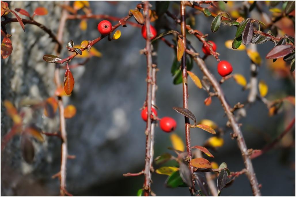 半田山植物園#2_f0224648_1120305.jpg