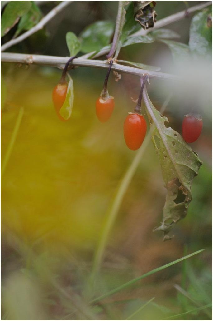 半田山植物園#3_f0224648_12413639.jpg