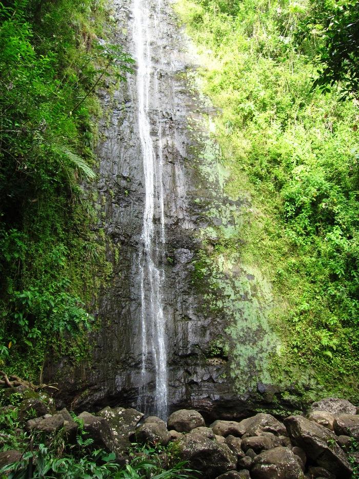 2011冬旅☆ハワイ ~2日目 マノアフォールズ その2~_e0232054_22493790.jpg