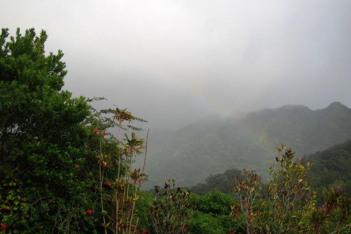 2011冬旅☆ハワイ ~2日目 マノアフォールズ その2~_e0232054_22533495.jpg