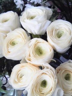 Spring  White_a0229658_13254470.jpg
