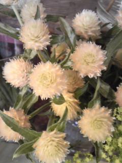 Spring  White_a0229658_13262168.jpg