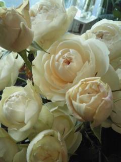 Spring  White_a0229658_1326367.jpg