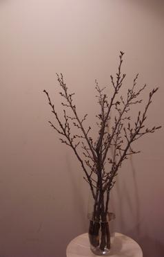 桜を生ける_d0104091_19293019.jpg