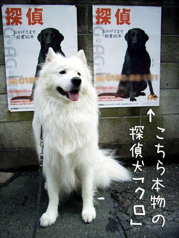 探偵犬クロ_c0062832_442597.jpg