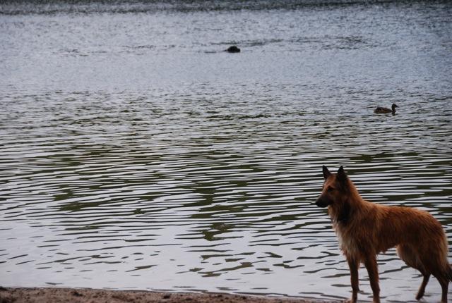 ドイツの思い出(ぽつぽつ思い出したこと)と好きな犬種_c0099133_032340.jpg