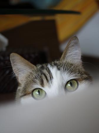 猫のお友だち リュウちゃんちびくんさくらちゃん編。_a0143140_01355.jpg