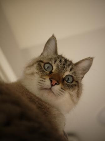 猫のお友だち リュウちゃんちびくんさくらちゃん編。_a0143140_075353.jpg