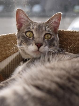 猫のお友だち あーるくん編。_a0143140_2054556.jpg