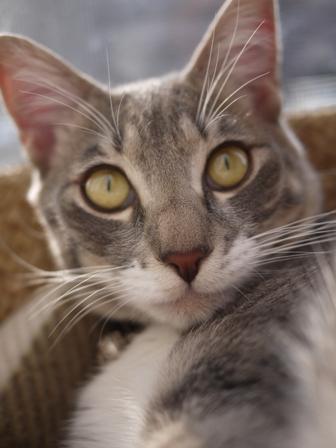 猫のお友だち あーるくん編。_a0143140_20563087.jpg