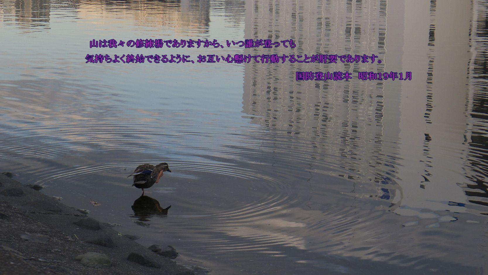 c0008948_9591250.jpg