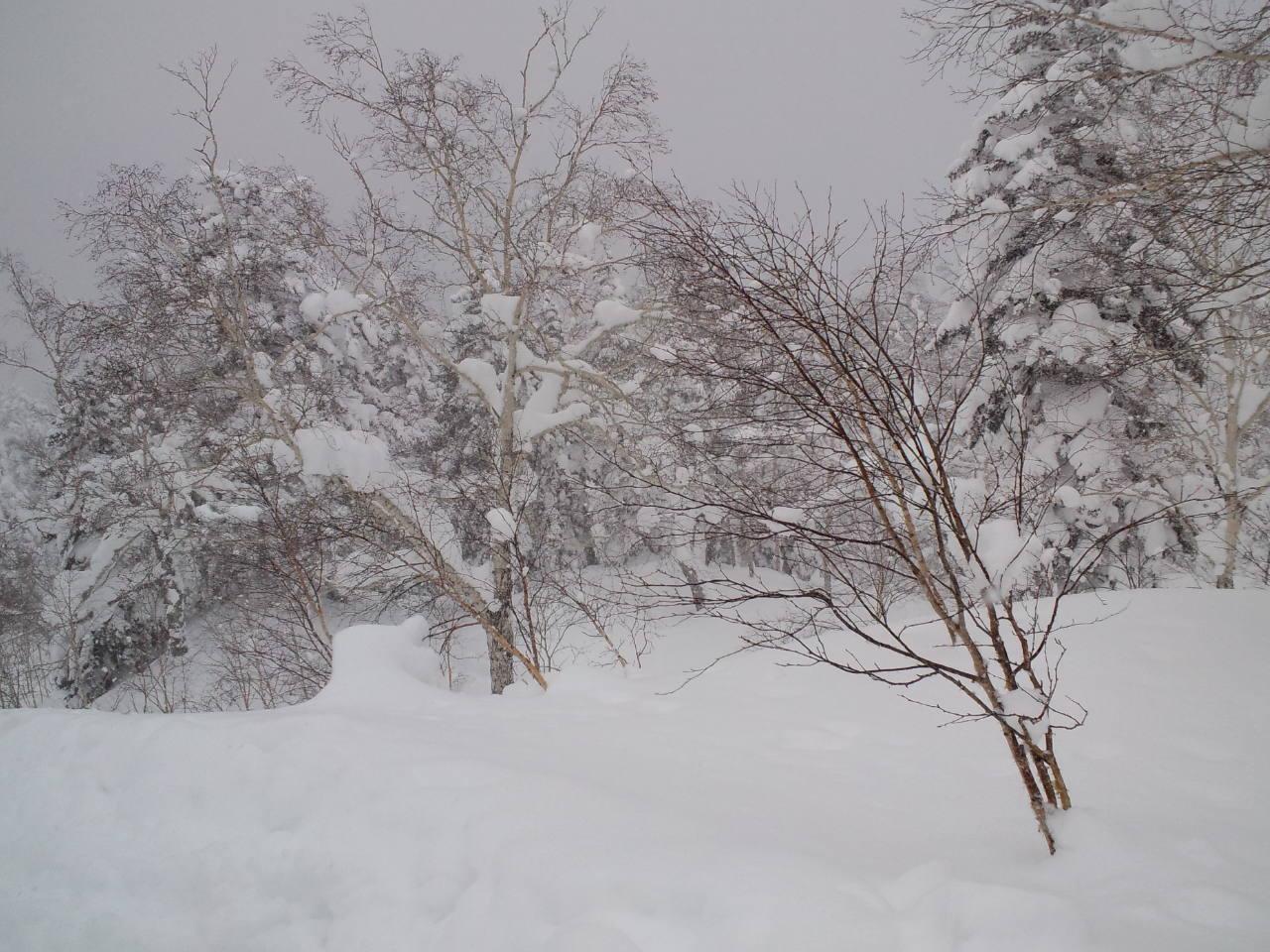 北海道6日目 ☆ 旭岳_c0151965_1434234.jpg
