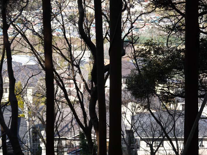 12年初の六国見山森林公園の臨時手入れ終了(1・14)_c0014967_1854359.jpg